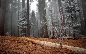 wood_trees_hoarfrost_log_bush_grass_faded_57356_2560x1600