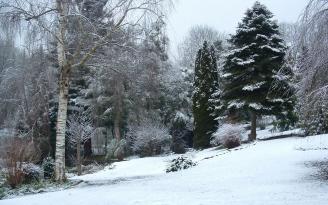 wood_winter_trees_tree_nursery_variety_snow_48270_1920x1200