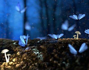 Blue Butterfly.jpeg