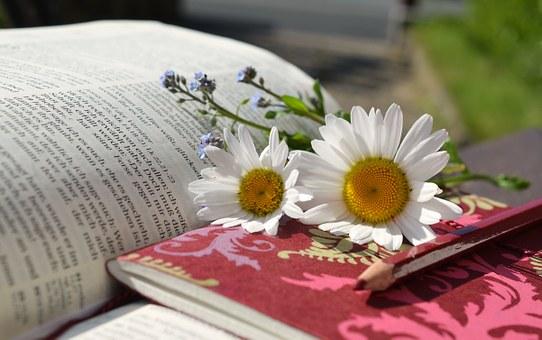 daisies-676368__340
