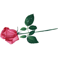 26111-9-pink-rose-transparent-image-thumb