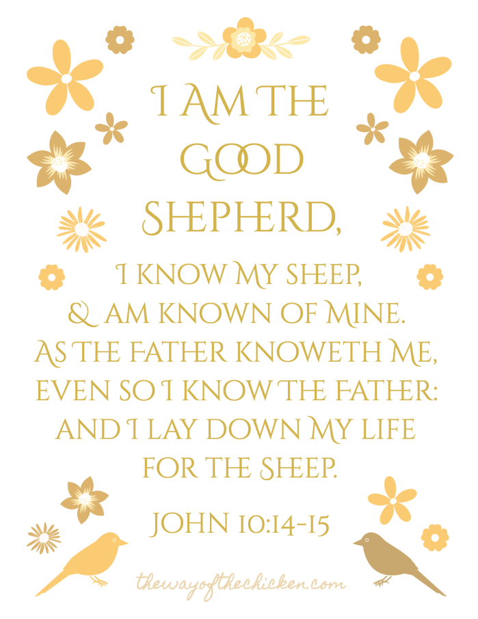 bible-verse-scripture-quote-transparent-background-john-10-14-15-kjv