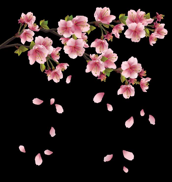 blossom-tree-clipart-16