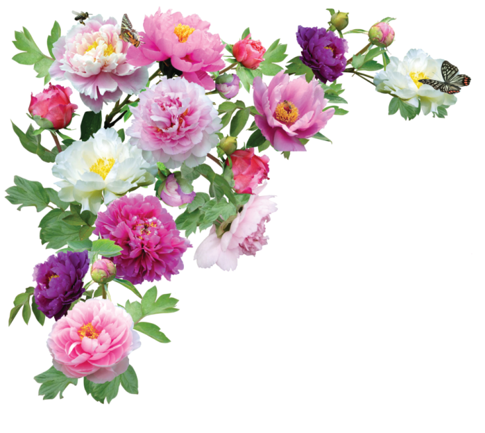 flower-png-garden-flowers-png-image-17937-947
