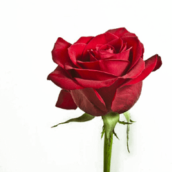 Flower-PNG-Image-With-Transparent-Background