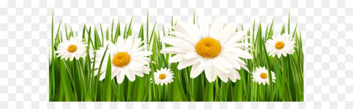 grass-and-white-flowers-png-clipart-5a1bbd466ed8a1.076690651511767366454