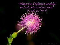 proverbs12_1