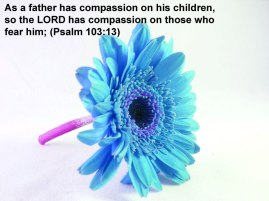 Psalm-103-13-Bible-Verse