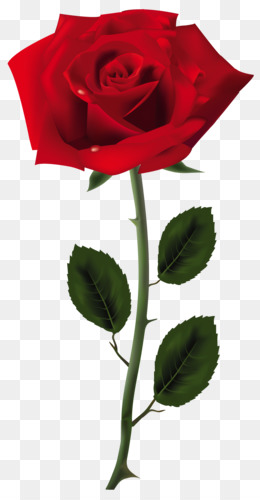 red-rose-png-art-picture-5a3c5983c4d453.7700005415139045158062