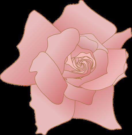 rose-303524_960_720