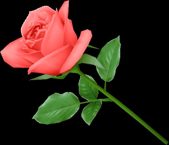 rose-png-3