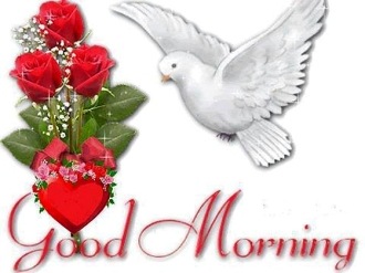 Beautiful-Red-Roses-And-Pigeon-Good-Morning