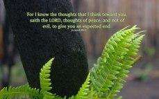 jeremiah-29.11