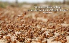 proverbs-30.27