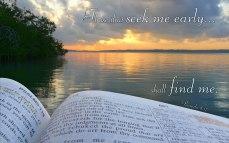 proverbs-8.17