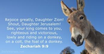 zechariah-9-9