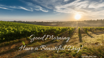 good-morning-america-live