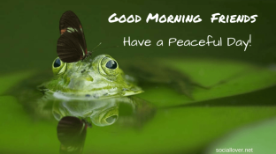 good-morning-my-friends-have-a-peaceful-day