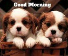 Good.Morning.12