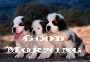 Good.Morning.13