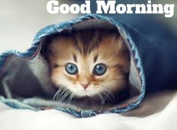 Good.Morning.3-1